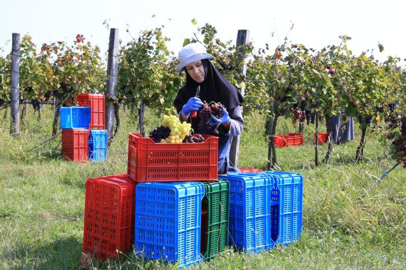 Манастирско вино Мерло