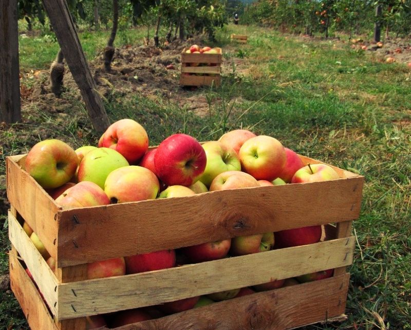 Sok od jabuke 0,2l