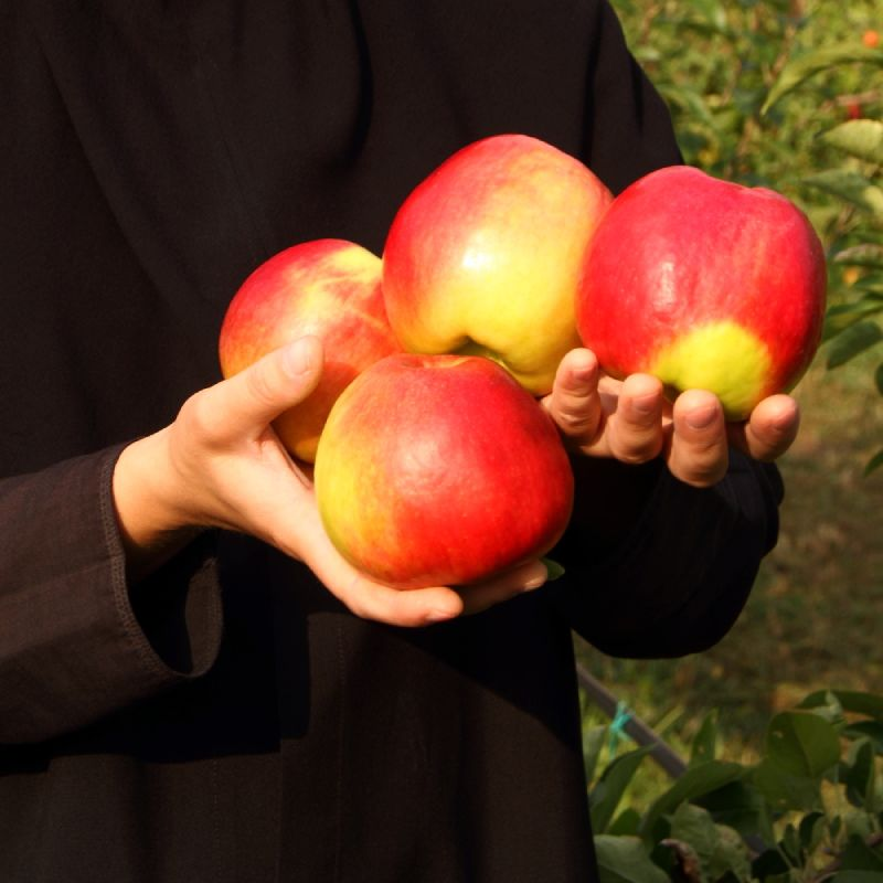 Sok od jabuke 0,72l